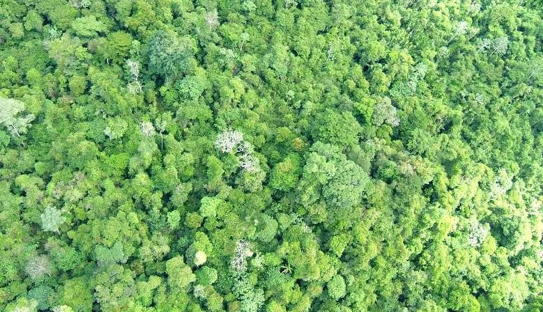 Nature et bois